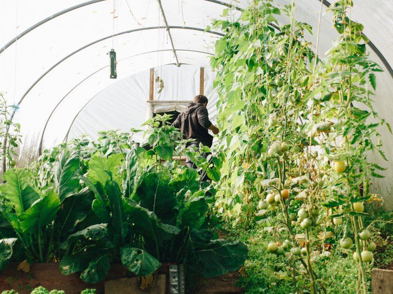 agriculture-botanical-conservatory-1084540.jpg